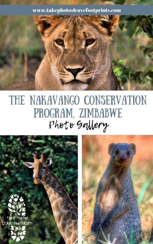 Nakavango Conservation Program, Zimbabwe